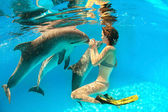 Dolphin and girl — Stock Photo