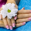 Stock Photo: French manicure