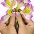 Few freesias in hands — Stock Photo