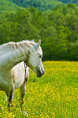 Horses in the meadow. — Stock Photo