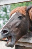 Horse head — Stockfoto