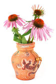 A bouquet of flowers of Echinacea purpurea in a clay vase — Stock Photo