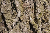 The bark of a tree covered with moss — Stock Photo