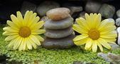 Yellow flowers and stones — Stock Photo