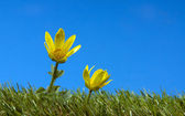 Yellow flower on green grass — Stock Photo
