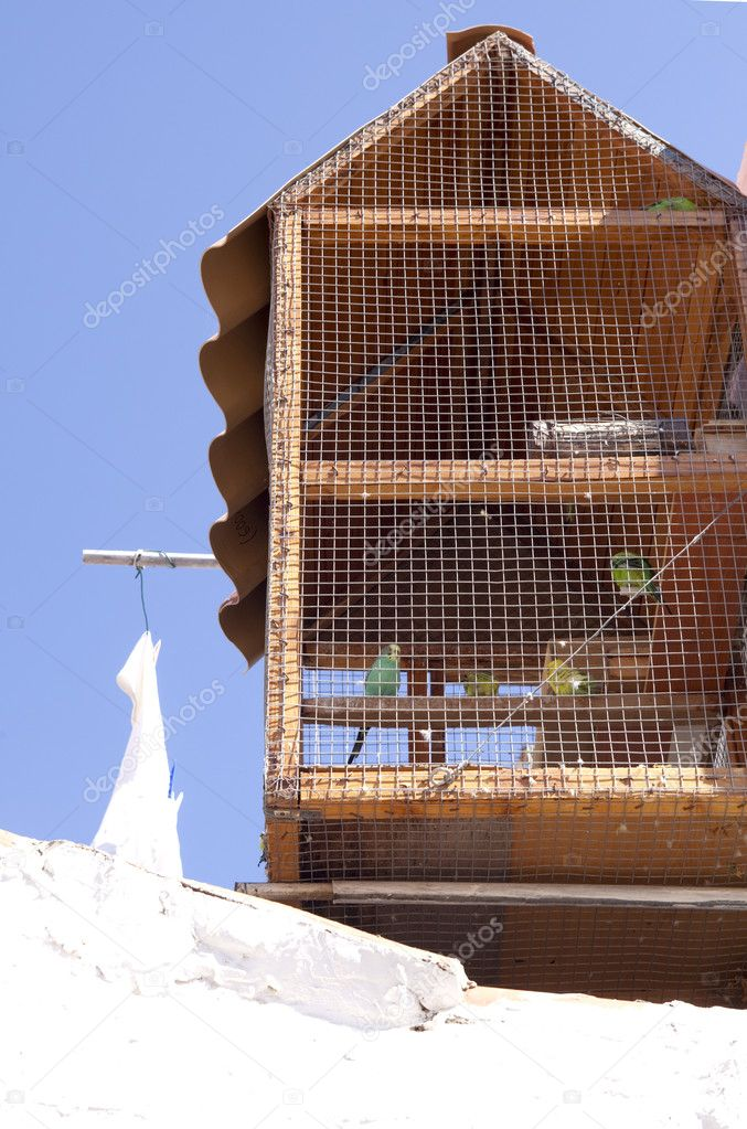 Different parakeets inside a wooden bird cage outdoors  Stock Photo #11690793