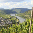 Mosel river with vineyard - Stock Photo