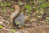 The squirrel — Stock Photo