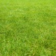 Green grass texture from golf course — Stock Photo