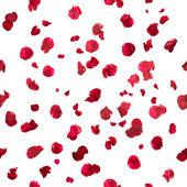 シームレスなバラの花びら — ストック写真