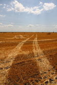 Wheat harvested field — Stock Photo