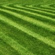 Mowed grass — Foto Stock