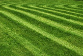 Mowed grass — Stock Photo