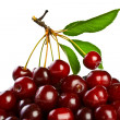 Stock Photo: Ripe juicy cherries