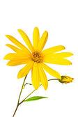 Letní žlutý květ — Stock fotografie