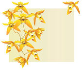 Yellow orchids — Stock Vector
