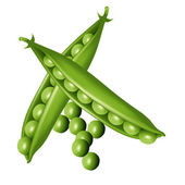 Green pea — Stock Vector
