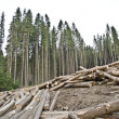 Deforestation - Foto Stock