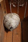 Hornet's nest — Stock Photo