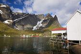 Fishing port in Reine — Stock Photo
