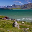 Stock Photo: Panoramon Lofoten