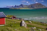 панорама на лофотенских островах — Стоковое фото