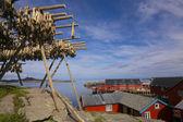 Stockfish on Lofoten — Stock Photo