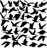 Pigeon silhouettes — Stock Vector