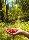 Wild strawberry in a hand in the wild wood — Stock Photo