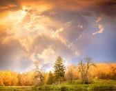 Autumn scenery. Beautiful gold fall in beautiful wood. — Stock Photo