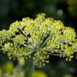 Stock Photo: Dill in the water droplets