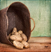 Russet potatoes spilling out of basket — Stock Photo