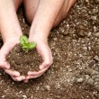Stock Photo: Close-up of child holding dirt with plant