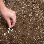 Close-up van kind planten van zaad — Stockfoto