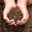Stock Photo: Close-up of child holding dirt