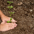 Close-up of child planting a small plant — Stock Photo