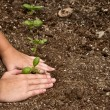 Stock Photo: Close-up of child planting small plant
