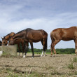 Horses on a summer morning - Stock Photo