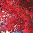 Stock Photo: Autumnal ornament, red leaves