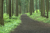 Hiking trail in the middle of forest — Stock Photo