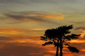 Sunset over Santa Cruz — Stock Photo
