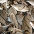Fish in a fishmarket in Kusadasi Turkey — Stock Photo