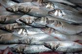 Fish in a fishmarket in Kusadasi Turkey — Stock Photo
