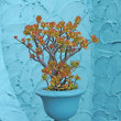 Jade plant in turquoise pot on an aqua colored stucco wall — Stock Photo