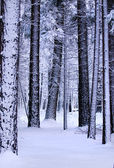 Snow in the forest — Stock Photo
