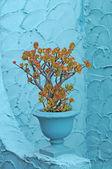 Planta de jade en pote azul turquesa en una pared de estuco color aqua — Foto de Stock