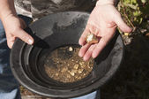 Man finding gold nuggets — Photo