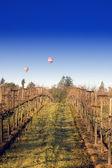 Balloons over Napa vineyard — Stock Photo