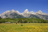 Pastoral sceni of the Tetons — Stock Photo