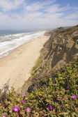 Deserted Northern California Coastline — Foto Stock